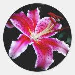 Stargazer Lily Round Sticker