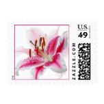 Stargazer Lily Silhouette Stamp