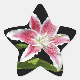 Stargazer Lily Star Sticker