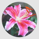 Stargazer Lily Stickers
