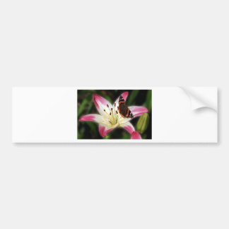 Stargazer Lily With Butterfly Car Bumper Sticker