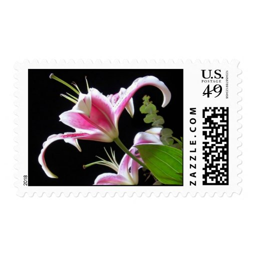 Stargazers Postage Stamp