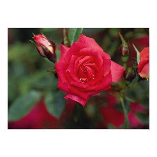 """Starina hermoso 'Meigabi color de rosa miniatura Invitación 5"""" X 7"""""""