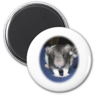 Staring Baby Rat Products Magnet