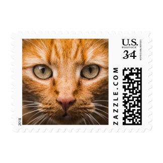 Staring Cat postage stamps