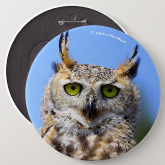 Staring Contest with a Beautiful Great Horned Owl Pinback Button