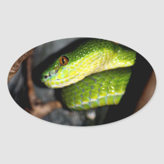 Staring green snake stickers