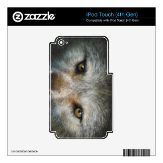 Staring Grey Wolf Eyes Wildlife Art Skins For iPod Touch 4G