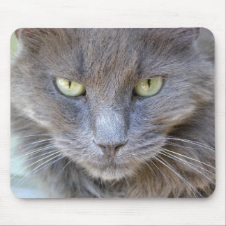 Staring Handsome Gray Cat with Green Eyes Mouse Pad