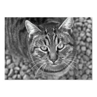 Staring Kitty Card