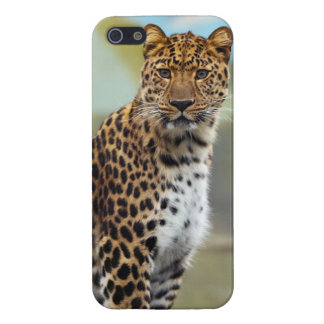 Staring Leopard iPhone SE/5/5s Cover