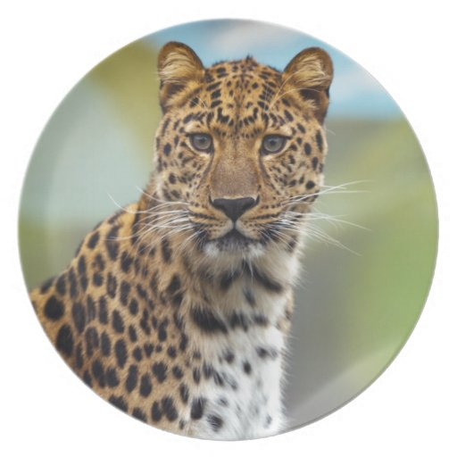 Staring Leopard Plate