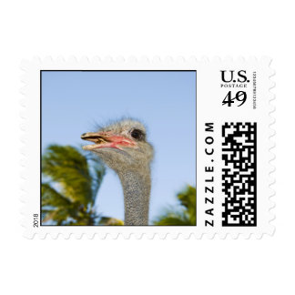Staring Ostrich Postage Stamps