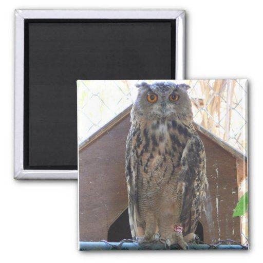 Staring owl refrigerator magnets