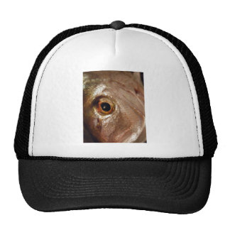 Staring Snapper Mesh Hats