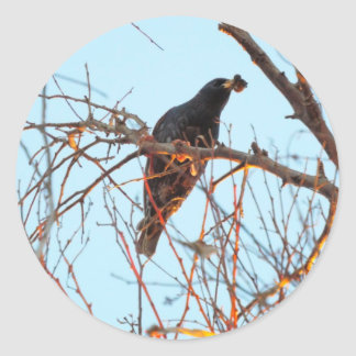 starling at sundown classic round sticker