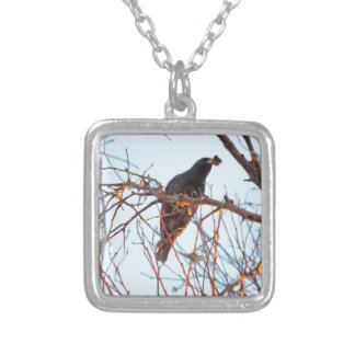 starling at sundown necklaces