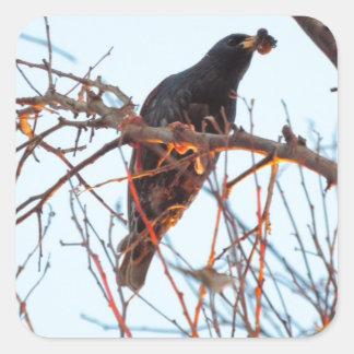 starling at sundown square sticker