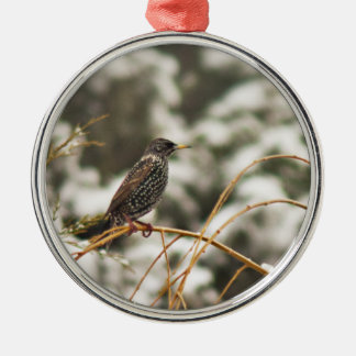 Starling bird in the Snow Metal Ornament