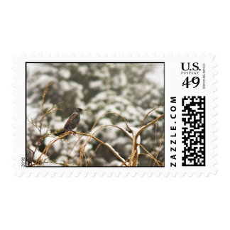 Starling bird in the Snow Postage