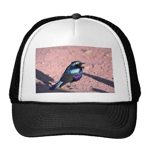 Starling brillante Azul-Espigado Gorro De Camionero