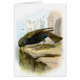 Starling Greeting Cards