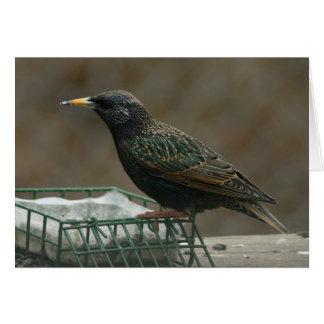 Starling de atontamiento tarjeta pequeña
