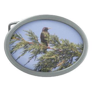 Starling en una hebilla del cinturón Spruce del ár Hebilla Cinturon Oval