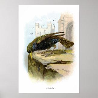 Starling Impresiones