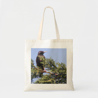 Starling in a Spruce Tree Bag