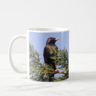 Starling in a Spruce Tree Custom Mug