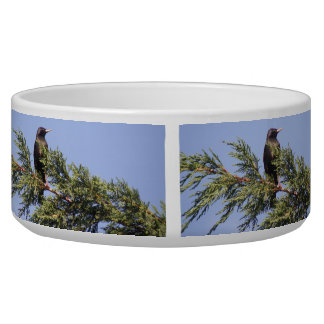 Starling in a Spruce Tree Dog Bowl