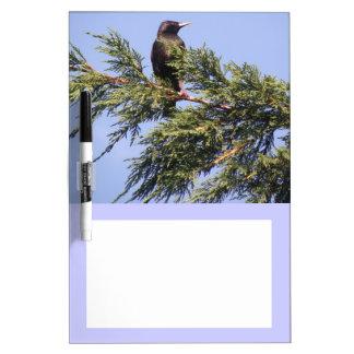 Starling in a Spruce Tree Memo Board