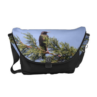 Starling in a Spruce Tree Messenger Bag