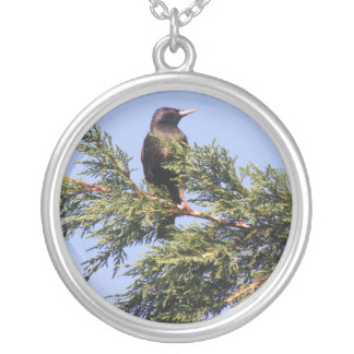 Starling in a Spruce Tree Necklace
