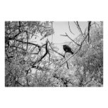 Starling on a frozen tree poster