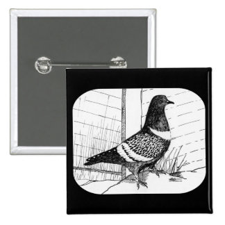 Starling Pigeon 1973 Pin