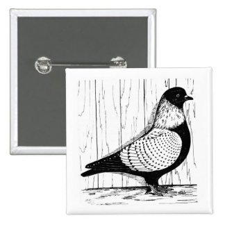 Starling Pigeon Silver-laced 1979 Pinback Buttons