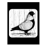 Starling Pigeon Silver-laced 1979 Postcards