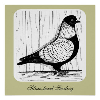 Starling Pigeon Silver-laced 1979 Poster