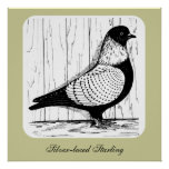 Starling Pigeon Silver-laced 1979 Posters