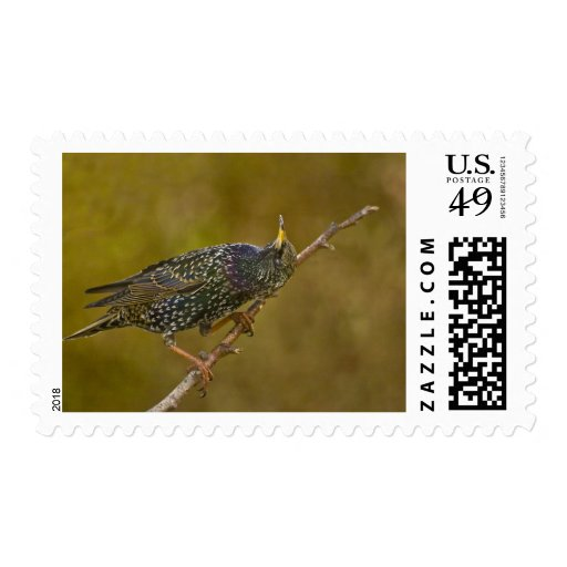 Starling Stamps