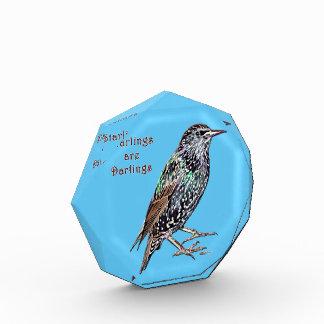 Starlings Are Darlings Award
