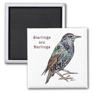 Starlings Are Darlings Magnet