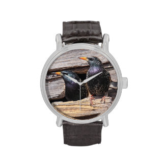 Starlings europeos relojes de mano