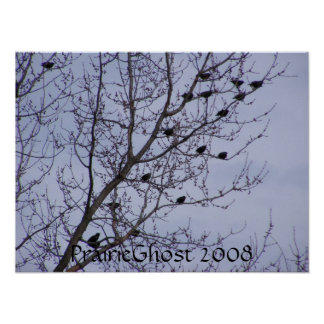 Starlings in a Tree Poster