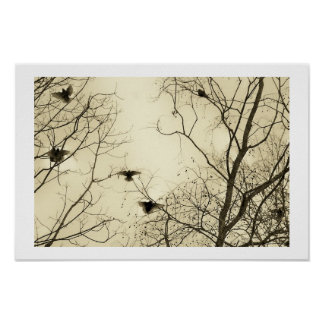 Starlings in winter poster