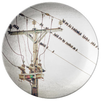 Starlings photography art plate