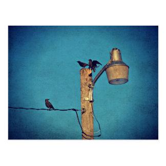 Starlings Postcard
