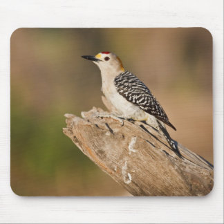 Starr Co. ranch, south Texas, USA, spring, Mouse Pad